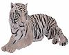 White Tiger Pet