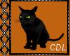 !C* T Witch Cat