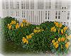 [Luv] Flower Bush