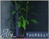 Thursday Night Plant