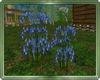 Landscaping bundle #2