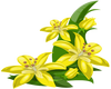 Yellow Exotic Flowers-R
