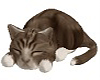Sleeping Cat cute