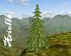 [ARIE] pine tree