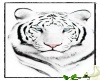 White Tiger.5.