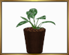 Potted Plant V2 derive
