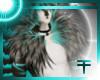 Dragonfly s. Tuffs M/F