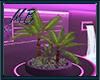 [9V5] Plant 1