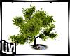 Life Tree Picnic