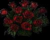 Dozen Roses ;)