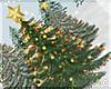!© Christmas Tree Green