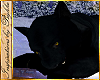 I~Black Panther