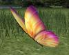 Butterfly Pets
