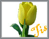 (Tis) Yellow Tulip