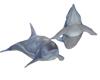 Feed + Ride Dolphin