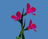 animated high plant