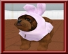 ~L~ Havanese bunnie pup