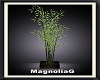 ~MG~ Bamboo Plant