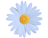 TF* Blue Daisy Flower
