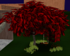 Red Tree with a Swing