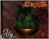 Autumn Attic Pot Plant