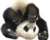TF* Baby Panda #3