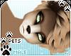[Pets] Kimi | Colours