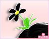 ♡ Daisy Flower B!