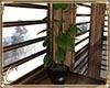 .:C:, Petit Chalet plant