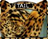 Bengal * Tail