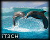 Animated Dolphins