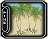 <Pp> Beach Palm Trees