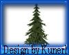 !(K) Evergreen Tree