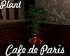 [M] Cafe Paris Plant