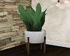 His Loft Plant