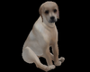 DOG IN RUM