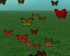 Flying Butterflys