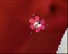 Earring fleur rose