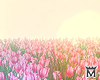 May�Animated field2