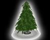 PLain pine tree