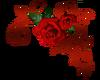 Rose Upper Right