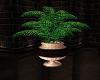 Patriotic Club Plant 1