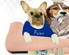 Dog Prince Pet