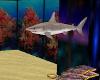 ~TQ~Fish Tank Shark
