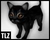 [TLZ]Little black kitten