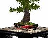 SweetAsian Bonsai Table2