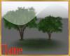2 small elm trees