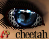 Wild.Eyes Cheetah (f)