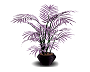 Purple Palm Plant