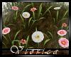 [V] Gerbera Flowers